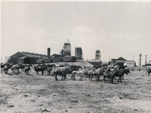 Horses On Vacation_No 20 Colliery_1952_Glace Bay_Cape Breton